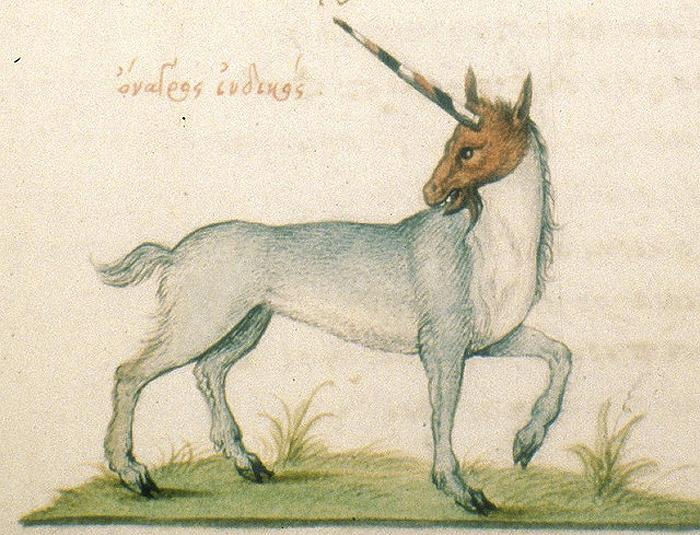 French_Unicorn_1564