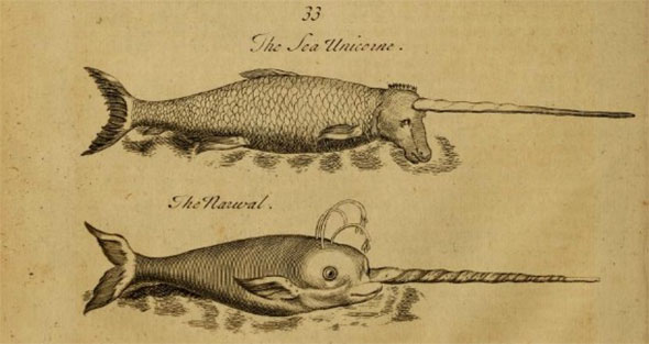 Narwhal's from Pierre Pomet's Beastiary