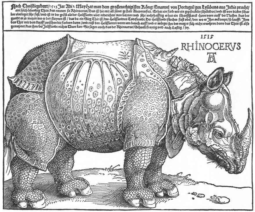 Rhinocervs